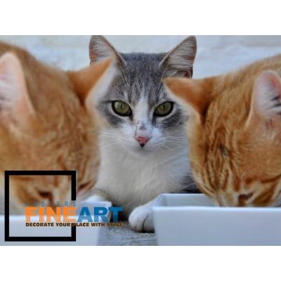 3 Cats Food